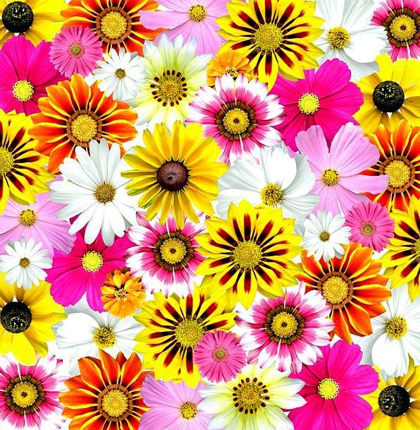 Flowers Plants Interesting Summer Straw-hat Colorf