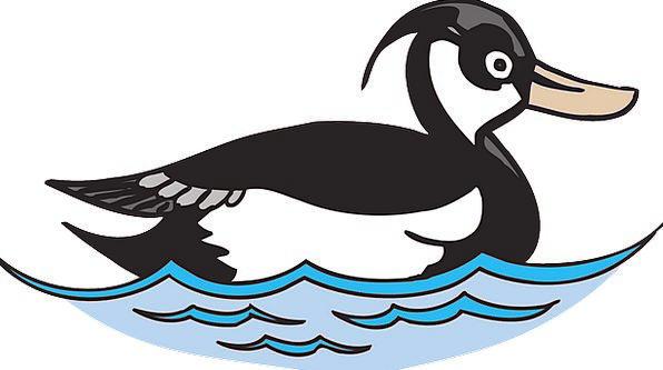 Water Aquatic Fowl Duck Stoop Bird Swimming Spinni