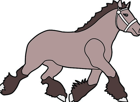 Horse Mount Physical Trot Canter Animal Mane Shock