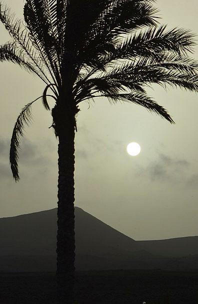 Palm Tree Vacation Travel Sunset Sundown Sun Lands