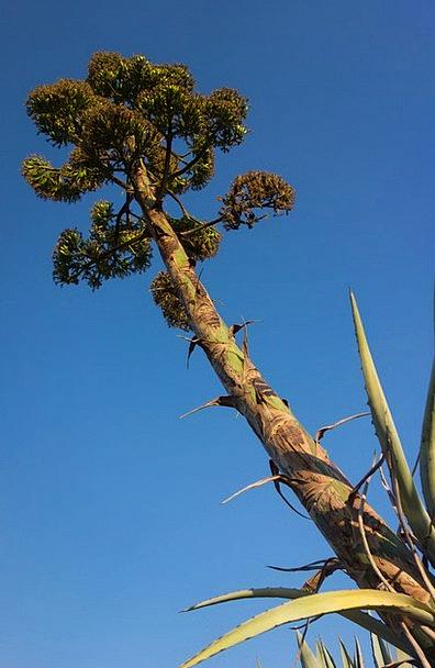 Pitera Landscapes Countryside Nature Tree Sapling