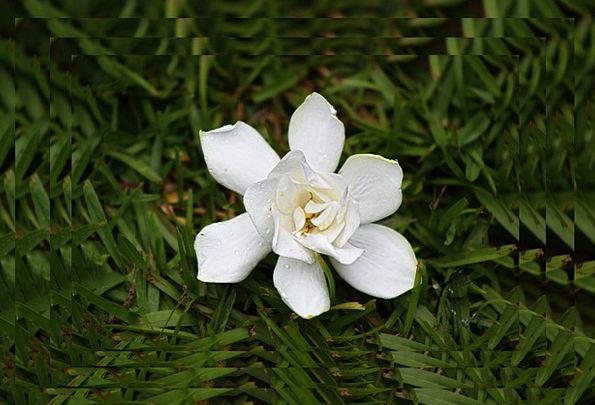 White Snowy Landscapes Floret Nature Spring Coil F