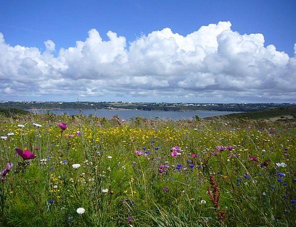 Landscape Scenery Landscapes Plants Nature Summer