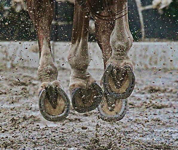Horse Mount Mud Mire Hooves Horse Show Animal Phys