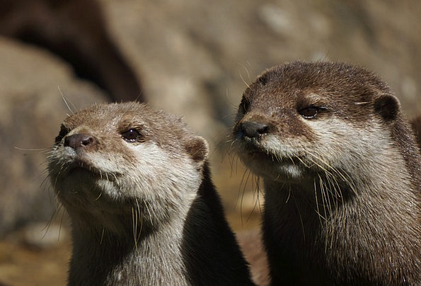 Otter Menagerie Animal Physical Zoo Portrait Repre