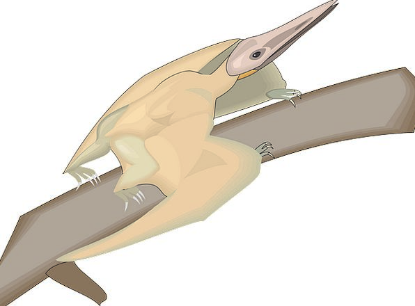 Bird Fowl Division Wings Annexes Branch Dinosaur R