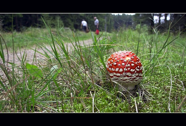 Mushroom Burgeon Bloodshot Poisonous Toxic Red Fly