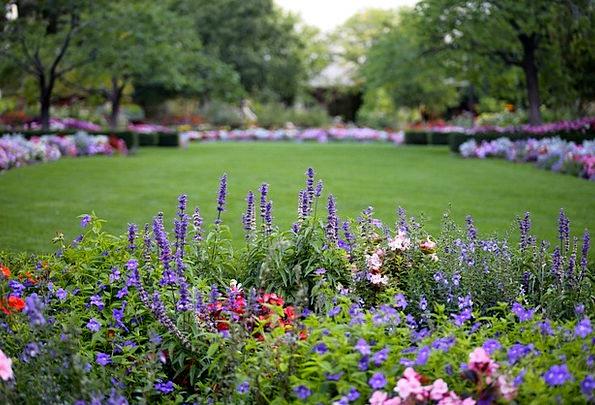 Flowers Plants Landscapes Common Nature Nature Cou