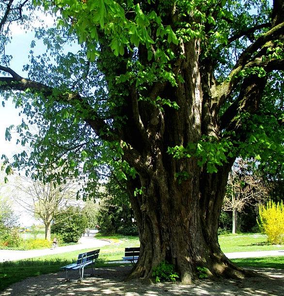Trees Plants Log Record Chestnut Tree Lake Constan