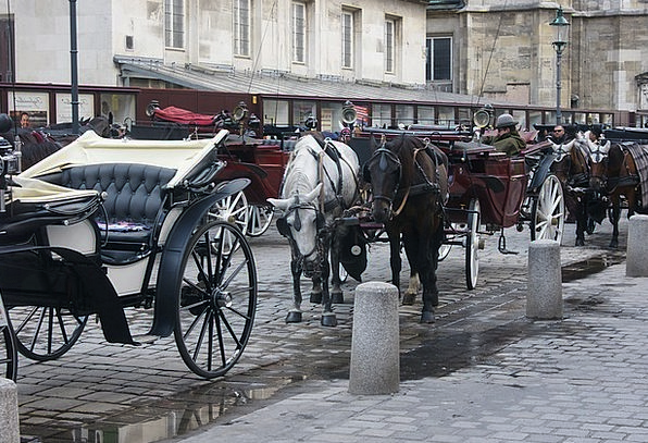 Vienna Bearings Horses Cattle Carriages
