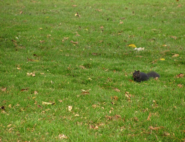 Squirrel Collector Landscapes Countryside Nature P