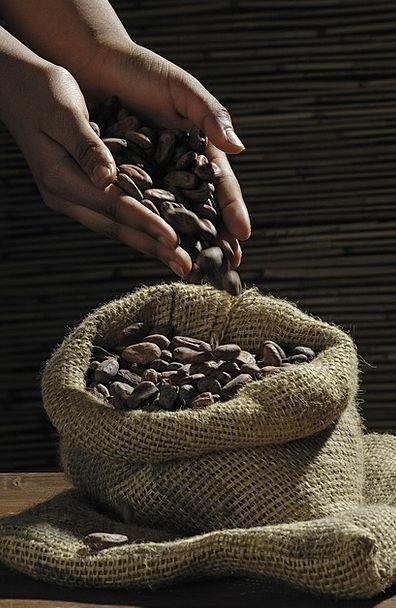 Cocoa Beans Cacao Cocoa Candy Bonbon Chocolate Bro