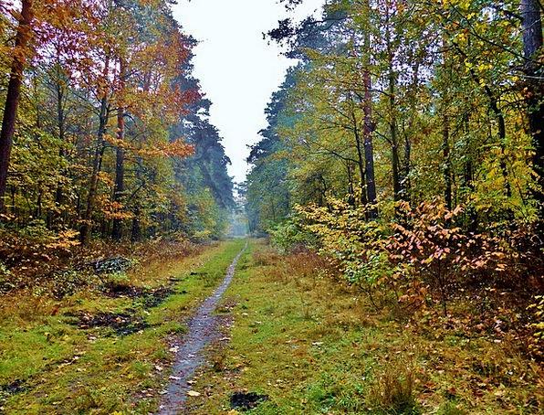 Forest Path Landscapes Trail Nature Autumn Mood Pa