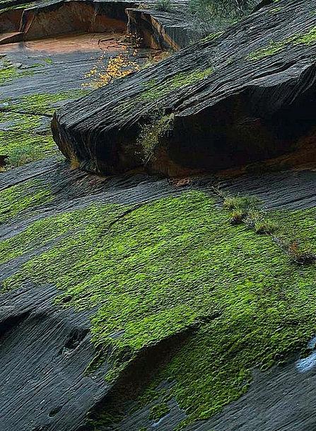 Moss Landscapes Gorge Nature Zion Canyon Stones Gr
