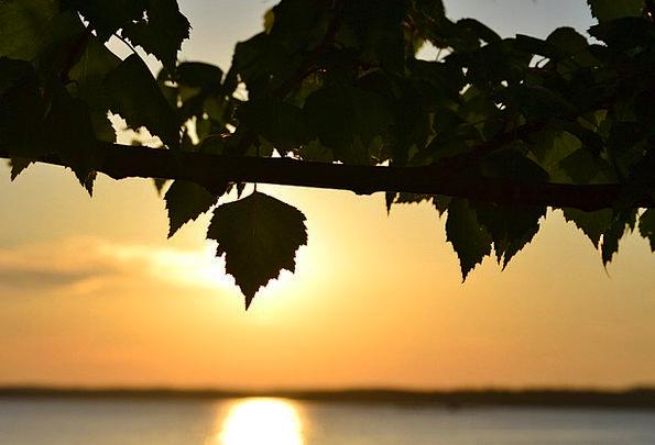 Sunset Sundown Vacation Freshwater Travel Deciduou
