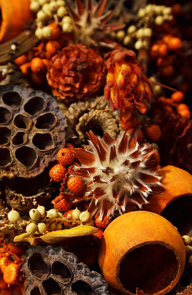 Aroma Smell Textures Backgrounds Autumn Fall Aroma