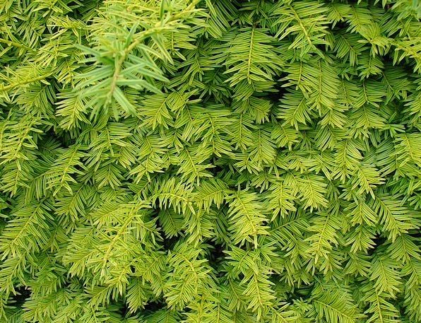 Branches Twigs Landscapes Hedgerow Nature Plant Ve