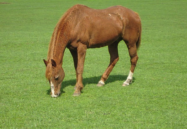Horse Mount Anecdote Animal Physical Chestnut Equi