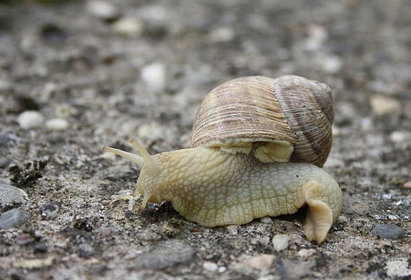 Snail Landscapes Bomb Nature Nature Countryside Sh