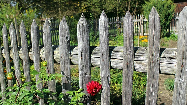Garden Fence Paling Wood Fence Fence Barrier Protect Wood