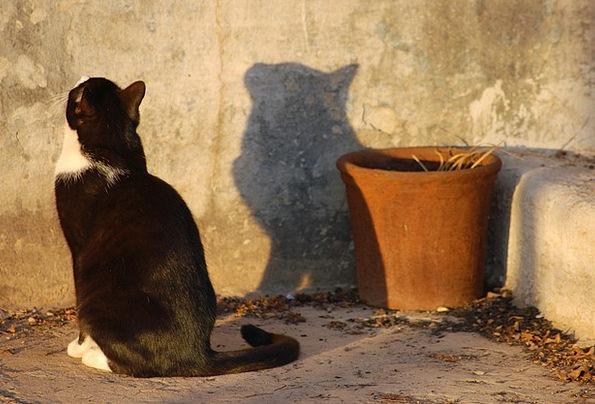 Cat Feline Gumshoe Profile Outline Shadow