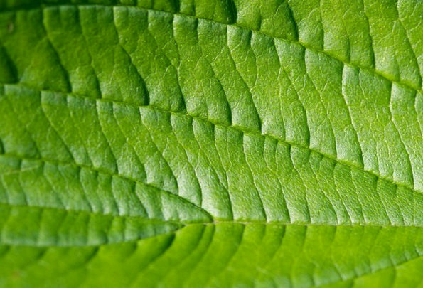 Leaf Foliage Textures Lime Backgrounds Macro Instr