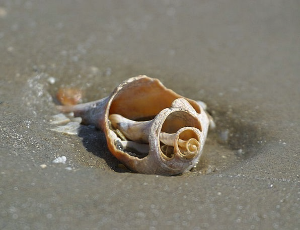Shell Bomb Vacation Travel Beach Seashore Seashell