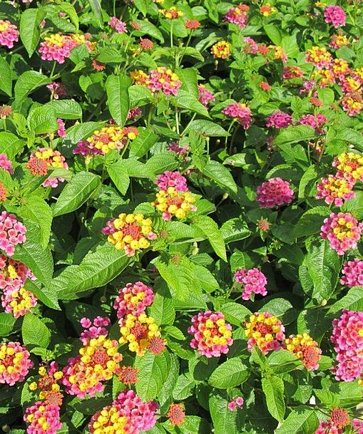 Flowers Plants Landscapes Minor Nature Colorful Interesting