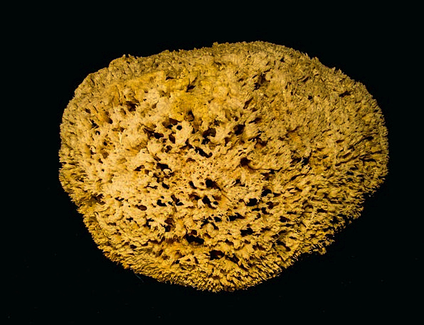 Natural Sponge Loofa Sea Sponge Sponge Decoration