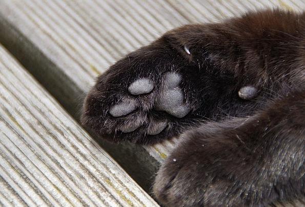 Paw Hand Foot Base Cat Paw Cat'S Paw Ten Animal Ba