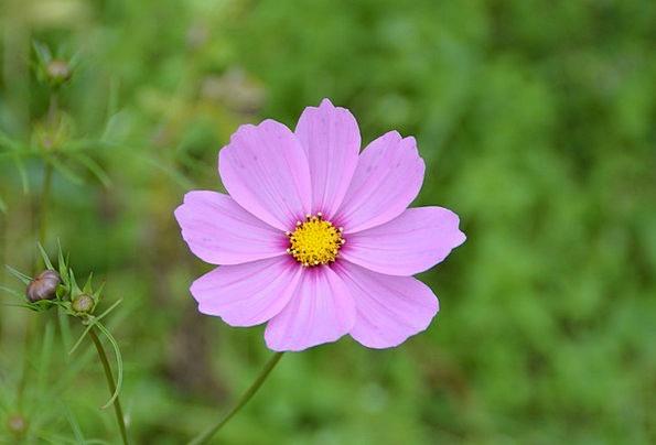 Clematis Landscapes Elaborate Nature Flower Floret