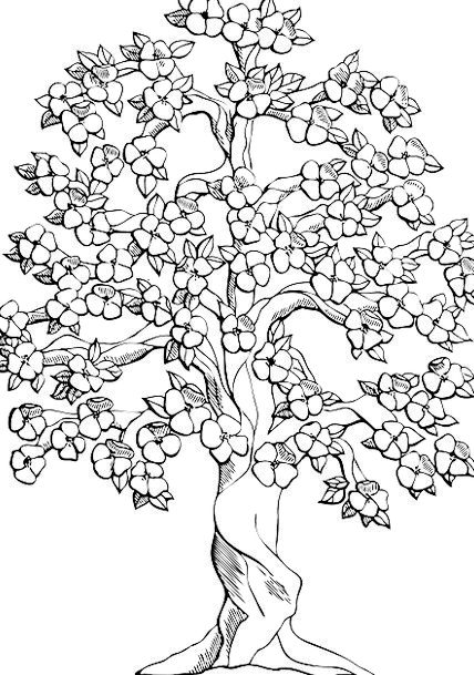 Flowering Tree Apple Blossoms Cherry Blossoms Tree