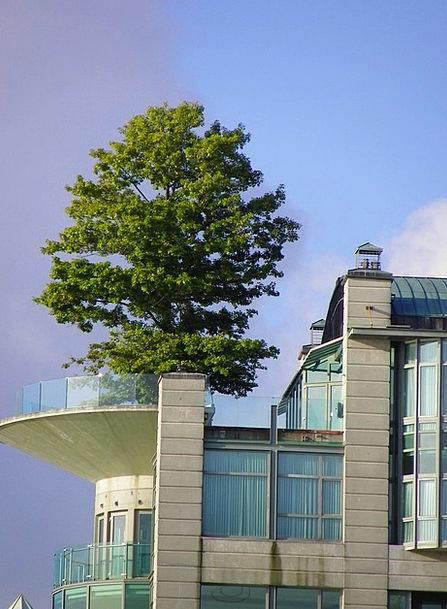 Tree Sapling Buildings Structure Architecture Vanc