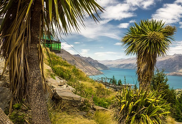 Queenstown Landscapes Nature Cabbage Tree New Zeal