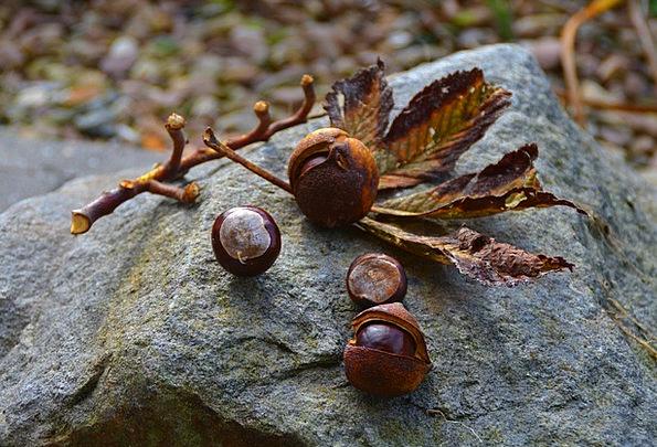 Chestnut Anecdote Landscapes Nature Autumn Fall Au