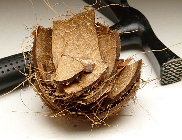 Coconut Bomb Coconut Shell Shell Coconut Fibres Ha
