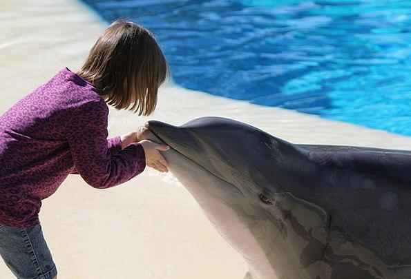 Girl Lassie Young New Dolphin Las Vegas Habitat Mi
