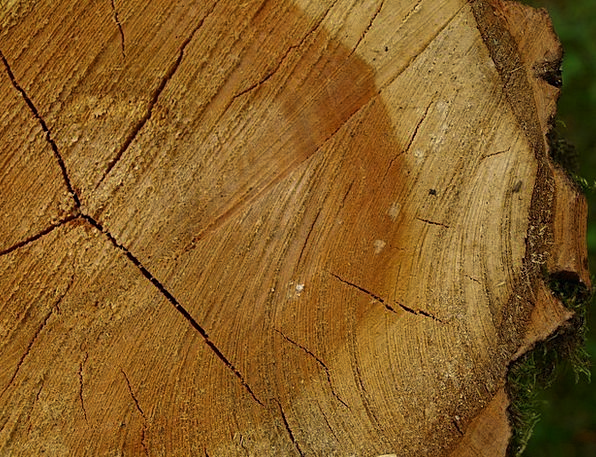 Tree Grates Annual Dinner Rings Tree Stump Bark Ba