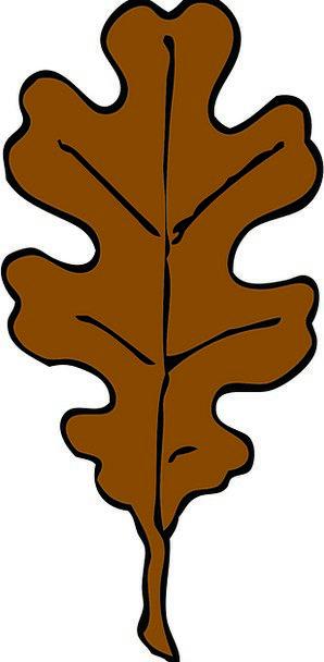 Leaf Foliage Autumn Oak Brown Shape Form Fall Sing