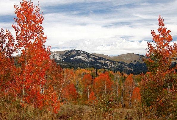 Colorado Landscapes Nature Nature Landscape Forest