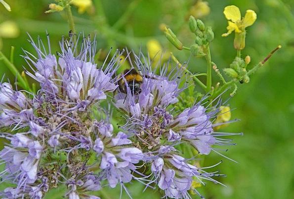 Flower Floret Landscapes Field Nature Spring Coil