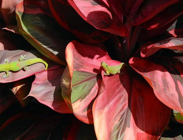 Lizard Landscapes Nature Plant Vegetable Gecko Wil