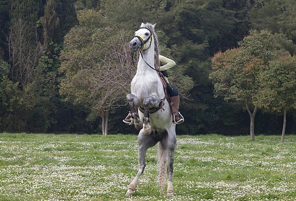 Horse Mount Rider Runaway Horse Jockey