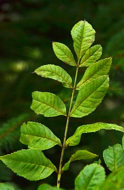 Macro Instruction Landscapes Greenery Nature Green