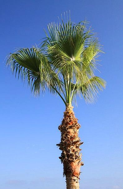 Blue Azure Landscapes Nature Green Lime Coconut Tr