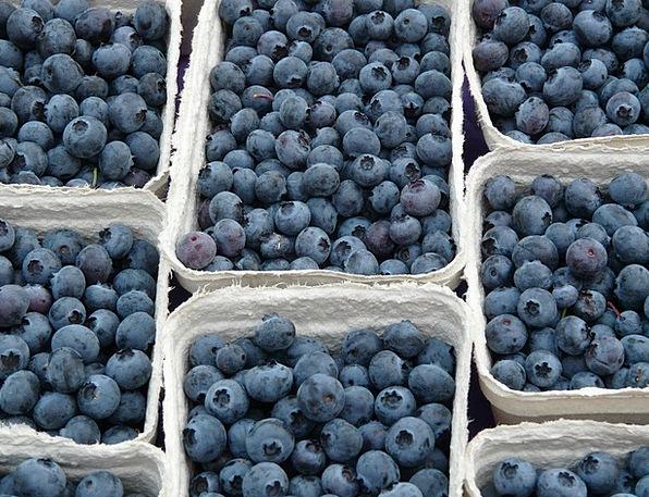 Blueberry Berries Vaccinium Myrtillus Bickbeere Bl