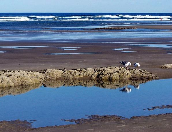 Beach Seashore Vacation Natures Travel Gulls Birds