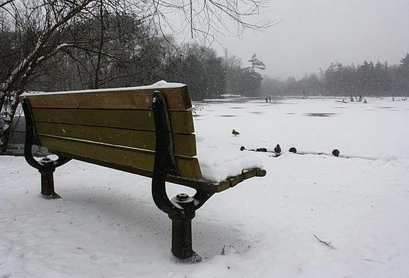 Bench Seat Landscapes Freshwater Nature Landscape