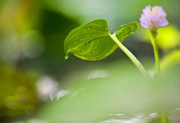 Flower Floret Landscapes Pool Nature Water Lily Po