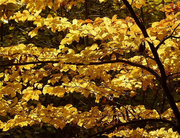 Beech Landscapes Nature Fagus Fagus Sylvatica Brig